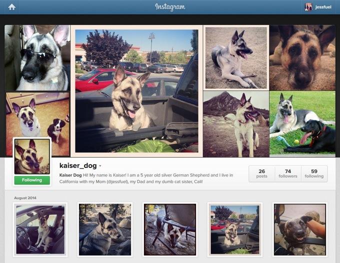 Kaiser_Dog's Instagram