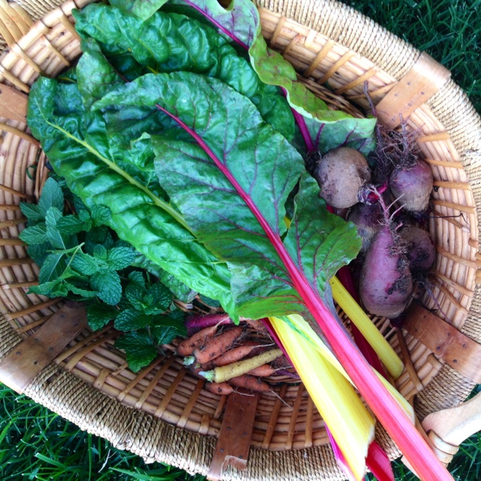 Freshly picked rainbox chard, beets, carrots and mint!
