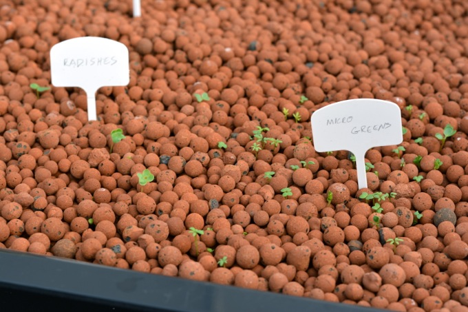 Aquaponic gardening: Sowing seeds in the grow bed
