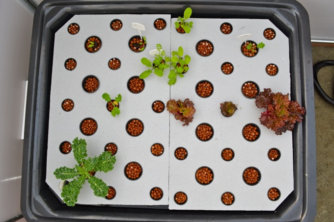 Aquaponic garden raft bed