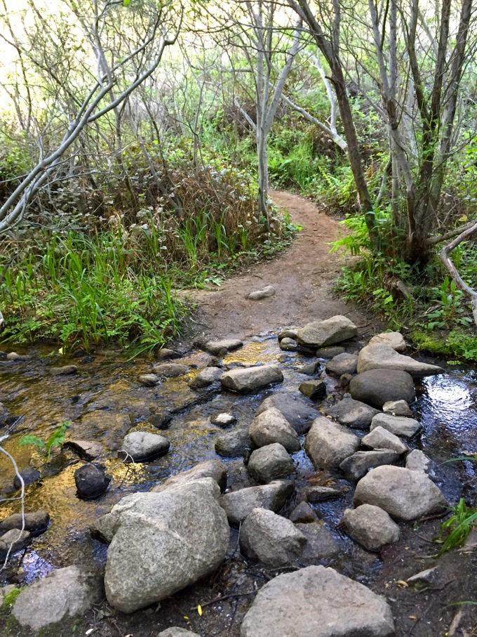 Garrapata State Park - Carmel, CA