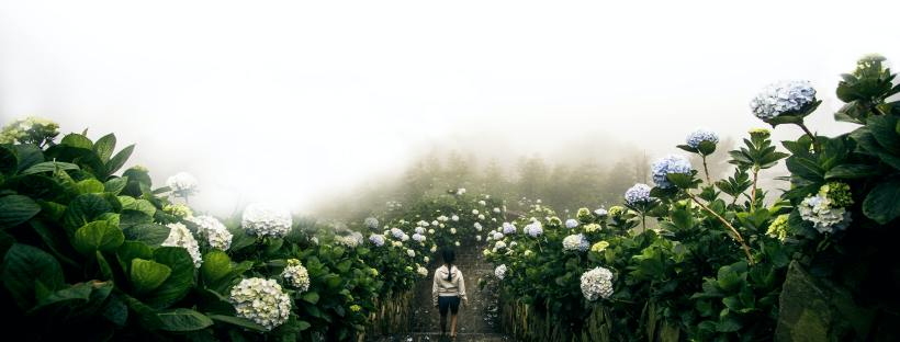 woman walking on path through hydrangeas