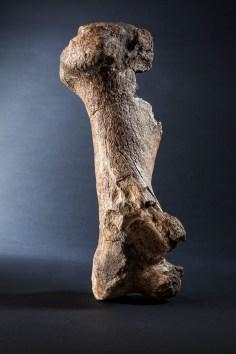 Steinzeit Knochen Jessica Morfis