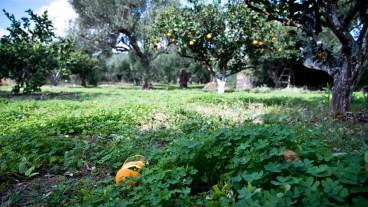 Garten in Sitia