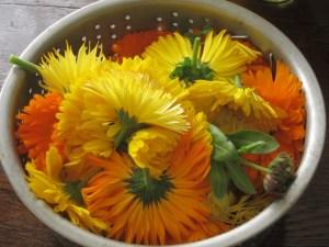 calendula bowl