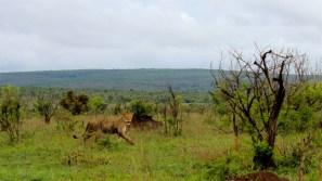 KrugerSAT16