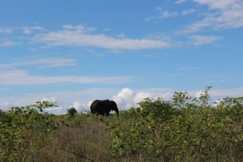 KrugerSAT34