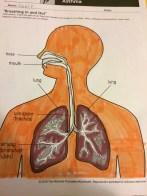Grade 2 Healthy Lungs