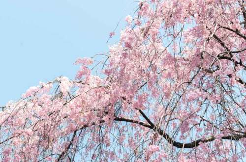 Beneath the spring flower