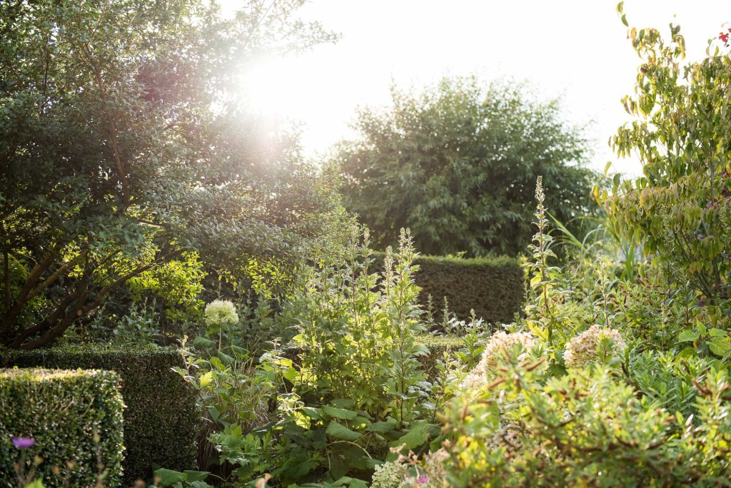 Surrey countryside garden with sunshine