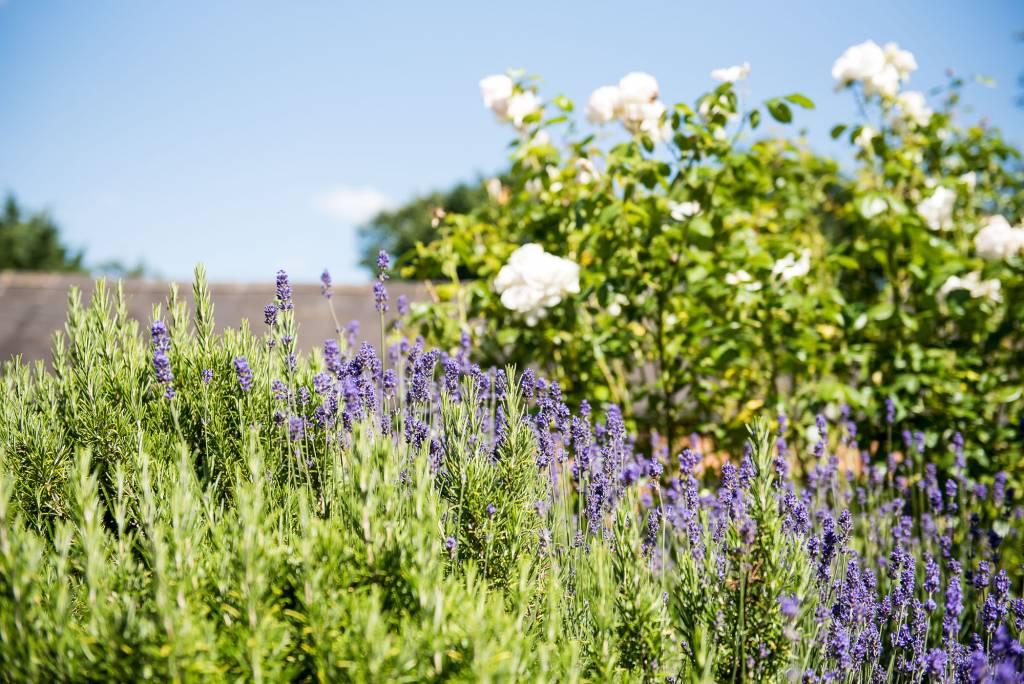 lgbt wedding photographer, Dodmoor House Wedding Venue lavender flower beds