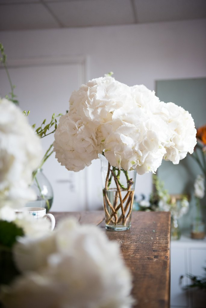 Giant white hydrangeas in flower studio