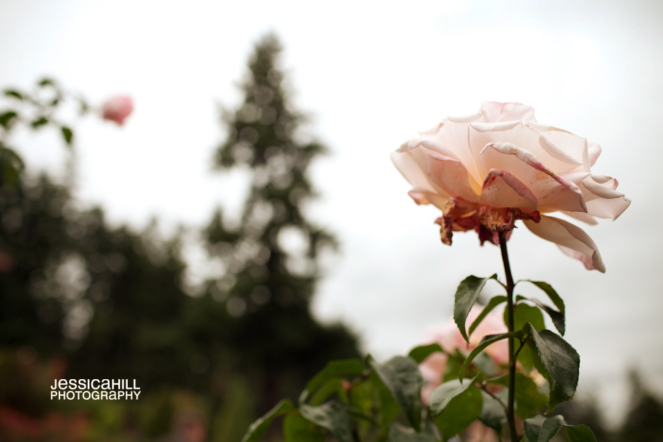 Portland-Rose-Garden-Wedding-9.jpg