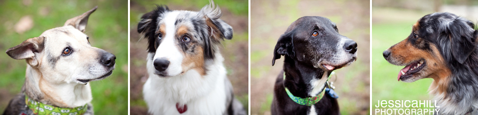 Dog_Photography_Portland_2.jpg