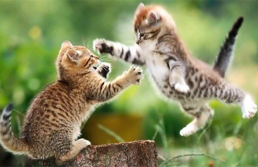 如想糾正貓咪這個壞習慣,就要知道原因,所以往往會用那種模式來對待貓咪,才可對癥下藥!