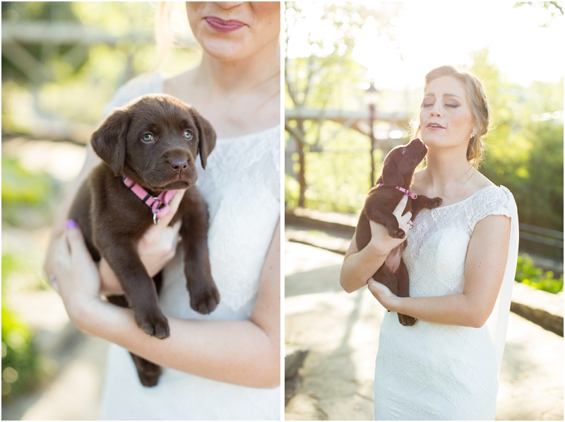 bride holding chocolate lab puppy