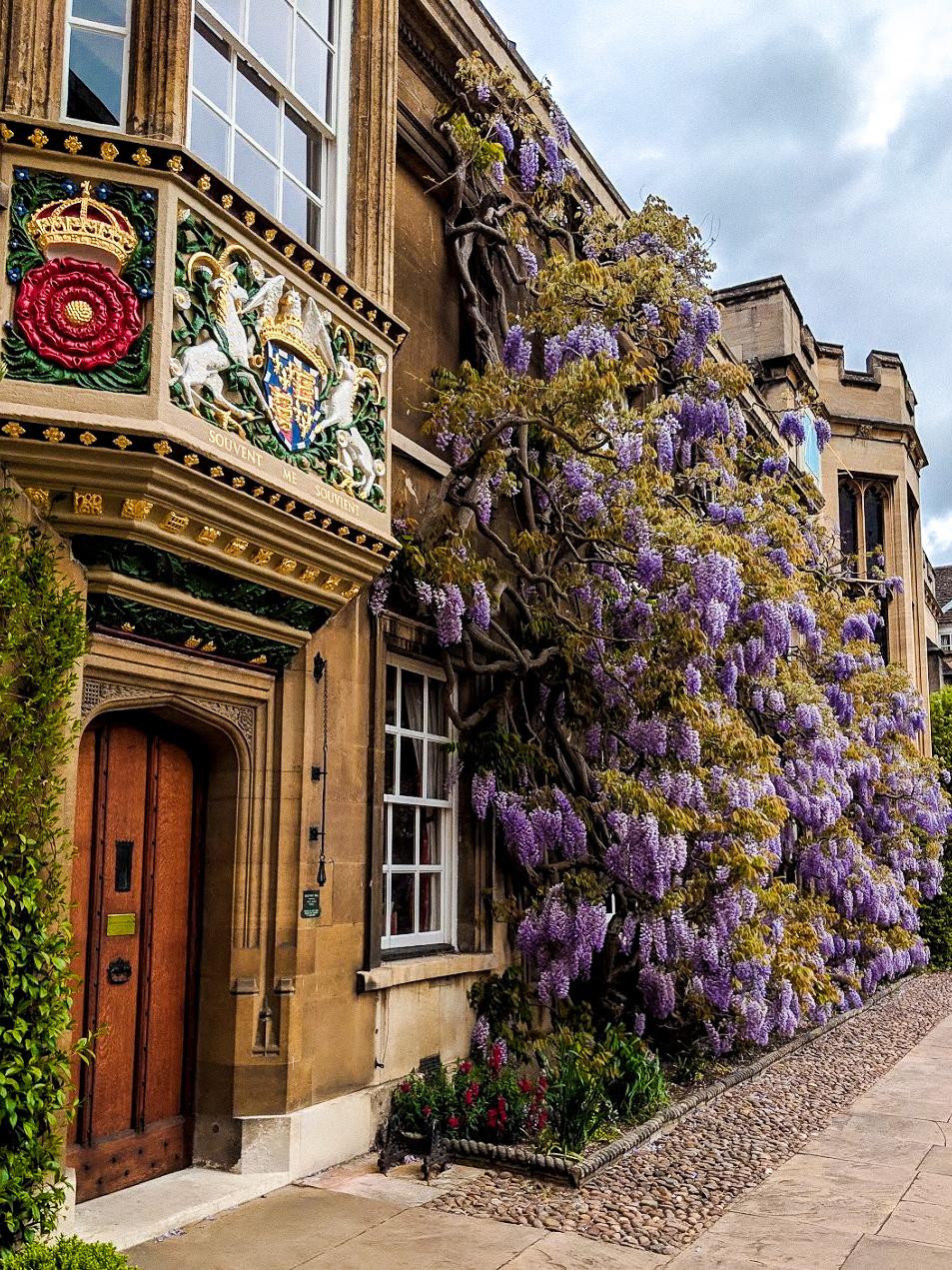 Christs-College-Cambridge-Wisteria