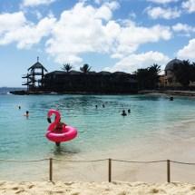 Flamingo in!