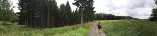Hiking the border through something that resembles the Black Forest