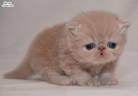 kitten21tl