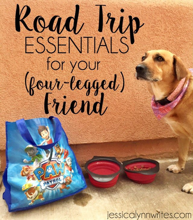 Going on a road trip with a dog can be great for the whole family, but it involves a little planning, some patience, and these essentials for the trip! | jessicalynnwrites.com