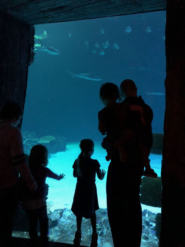 seven things for kids to do in vegas jessica lynn writes