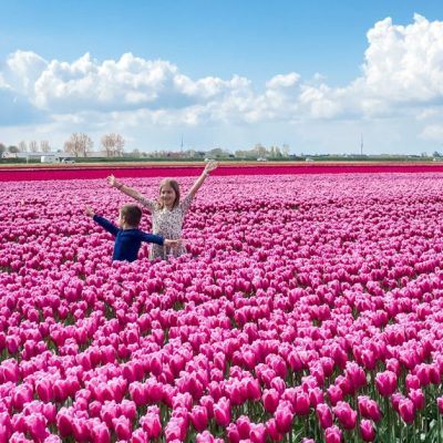 Tulip Hunting in the Netherlands