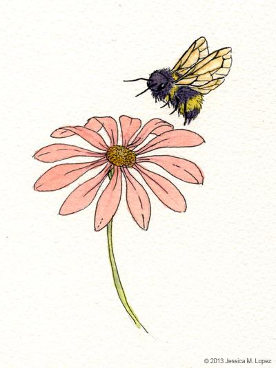 Bumblebee Sketch : bumblebee, sketch, Bumble, Jessica, Lopez