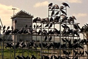 Crows on jungle gym in The Birds