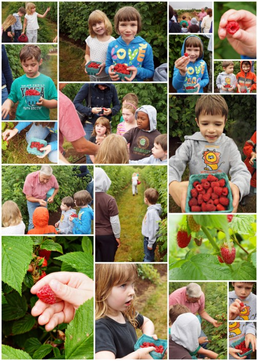 Olson farms, Salem Oregon, berry picking, upick
