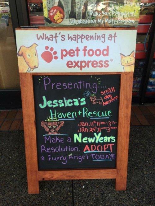 Dog Adoption Pet Food Express
