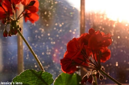 Flowers in the midnight sun