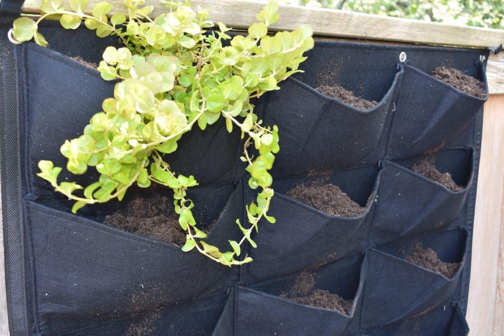 photo of felt vertical garden planter with creeping jenny