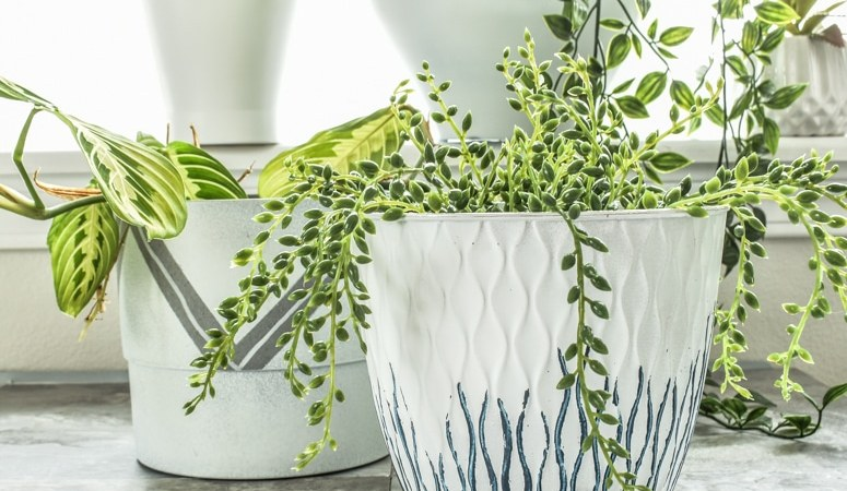 Turn Dollar Store Pots into Modern Indoor Planters!