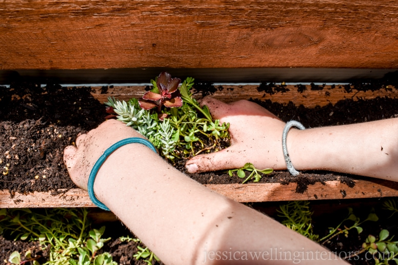 image of child planting sedum plants in wood vertical garden