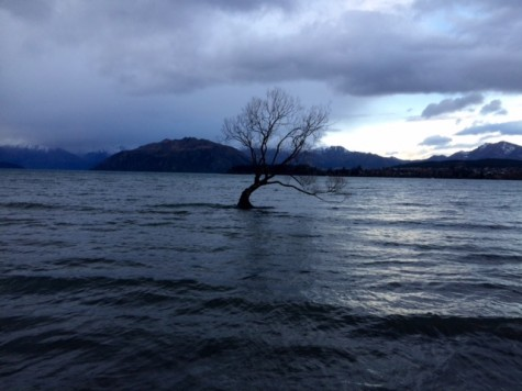 The floating tree (photo from Grover)