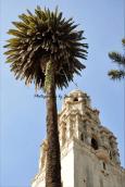 Balboa Park Looking Up