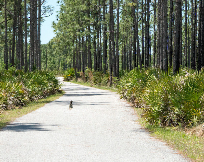 fun things to do in pasco county, florida