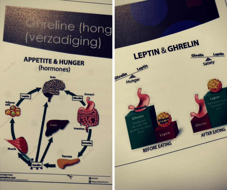 leptine en ghreline