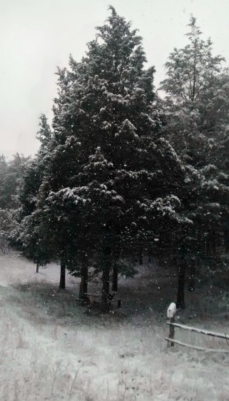 SnowTrees01
