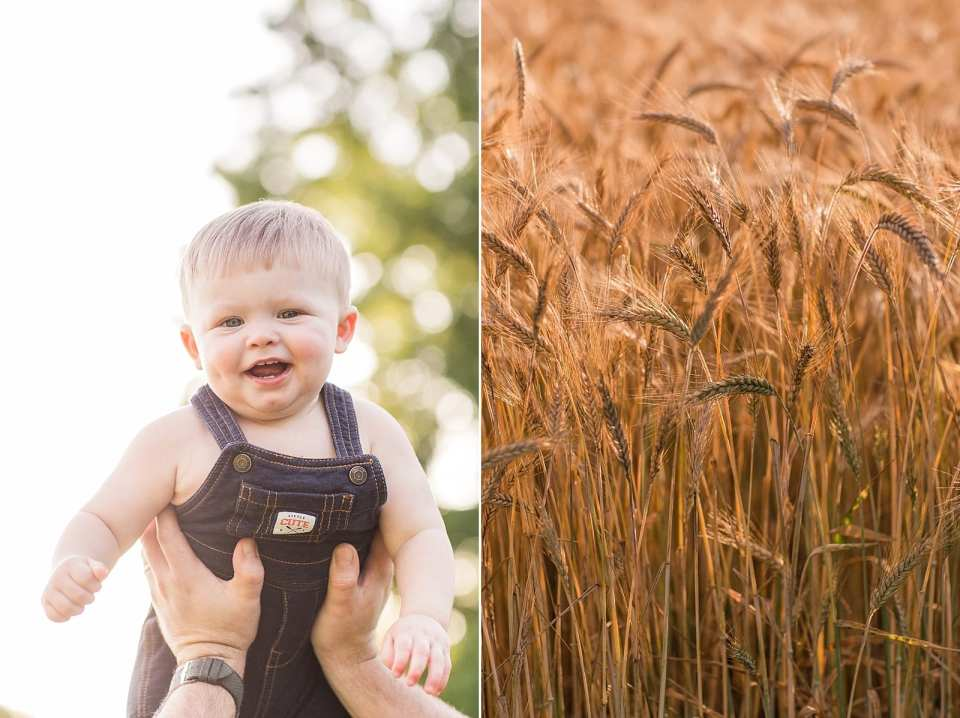 dobson wheat field one year family photographer