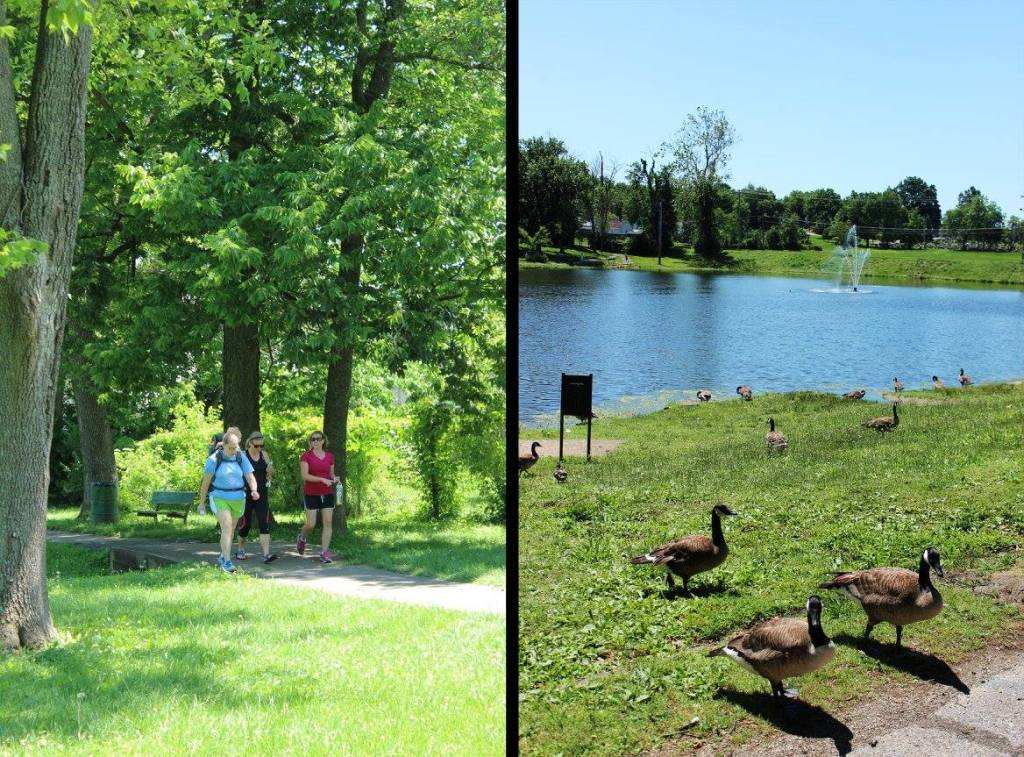 Walkers and geese at Lake Mingo.