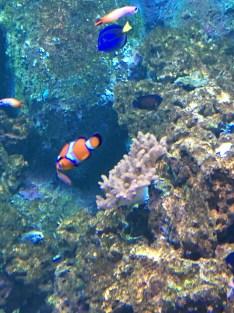 I found Nemo! and Dory!