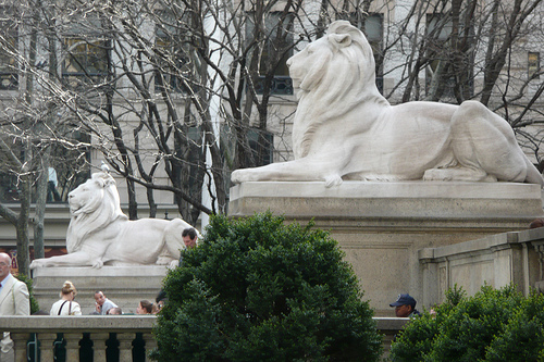 Image result for NYPL lions