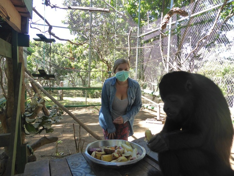 Howler Monkey eating costa rica animal rescue centre