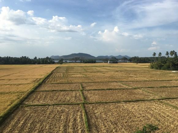 Sri Lanka: Fields in Tissamaharama
