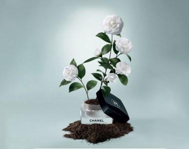 La Beauté se cultive | © Chanel