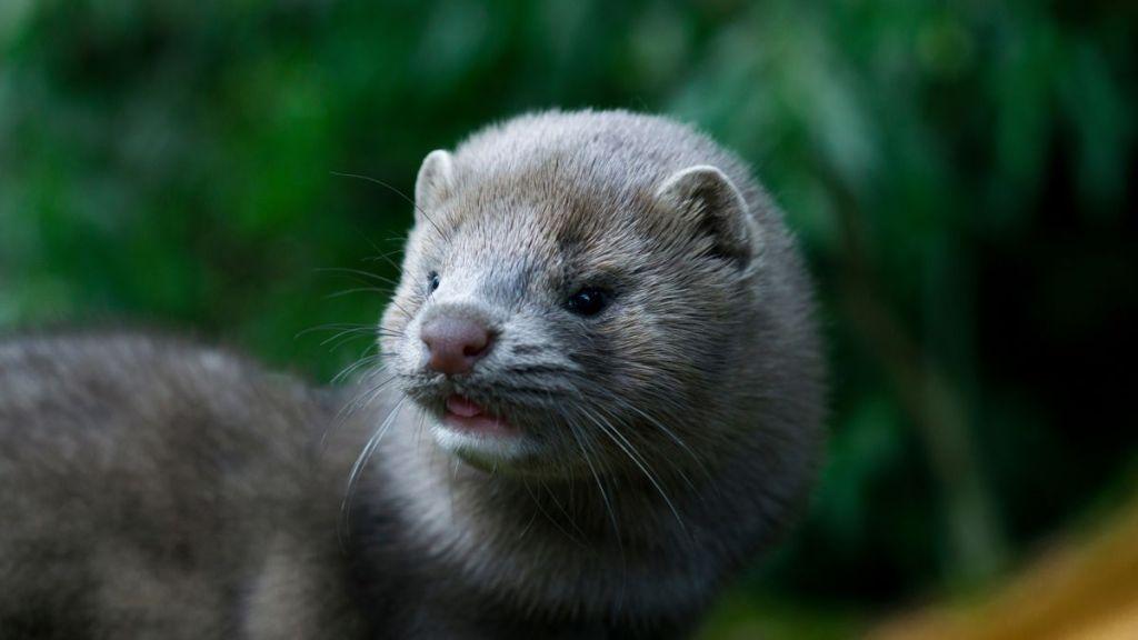 Sephora bans fur lashes after PETA campaign | © Shutterstock