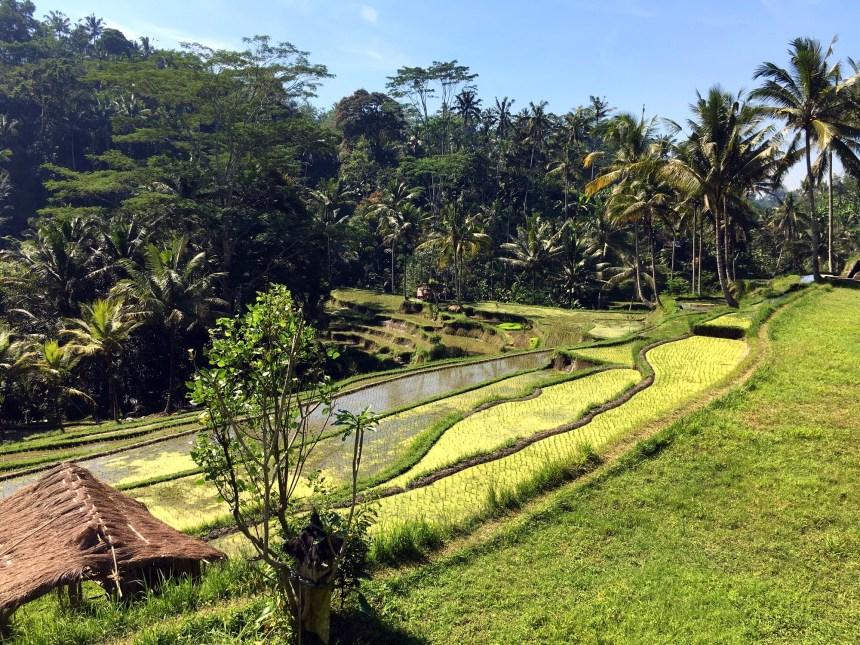 pura-gunung-kawi-rizieres-bali-2