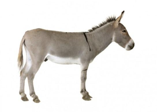 christmas-donkey-e1290442700196
